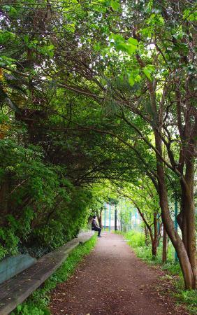ถนนสีเขียว มัตสึโนะกาวะ