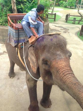 Tegalalang, Indonesia: Elephant wounds from bull hook
