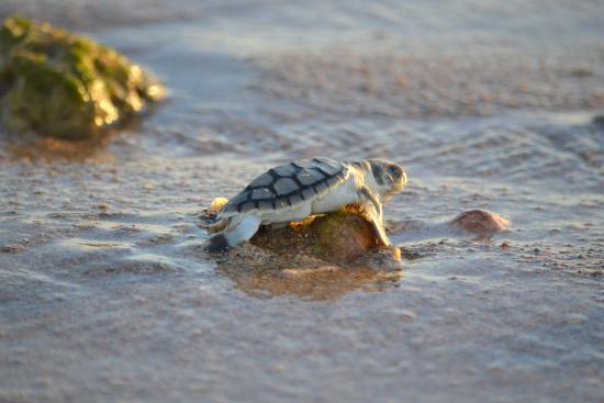 Thevenard Island, Australia: Mackerel Islands