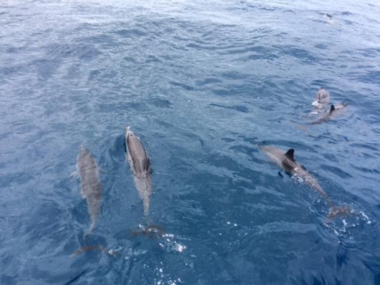 Eleele, ฮาวาย: Spinner dolphins!!