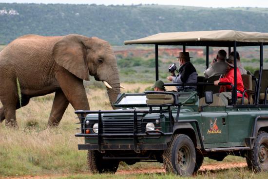 Amakhala Game Reserve, Sudáfrica: Game Drive