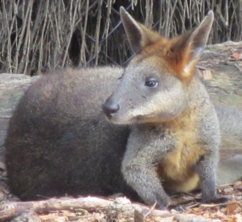 Mosman, Australia: New too