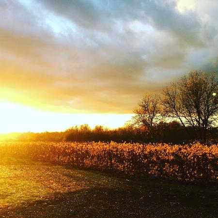 Amity, Oregón: Gorgeous sunset at Keeler Estate Vineyard