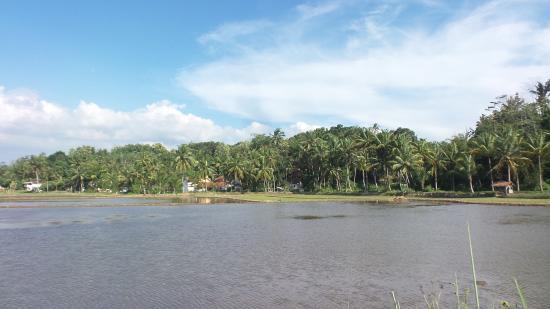 Situ Gede