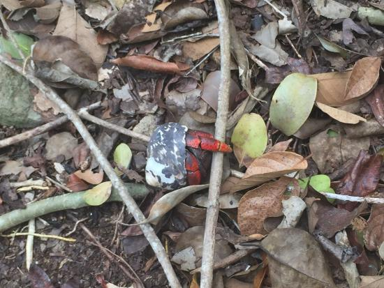 Hermit crab on the trail - Foto van Quill/Boven National ...