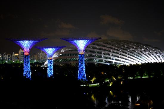 gardens by the bay night view of garden by the bay - Garden By The Bay At Night