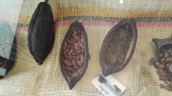 Ballinskelligs, Irlandia: more cocoa beans