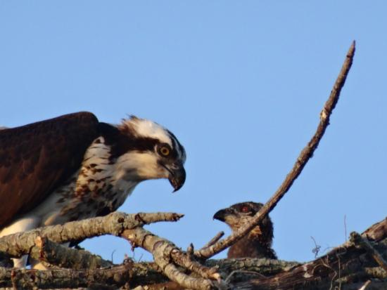 The Gardens by EVRentals: Falcon nest on property