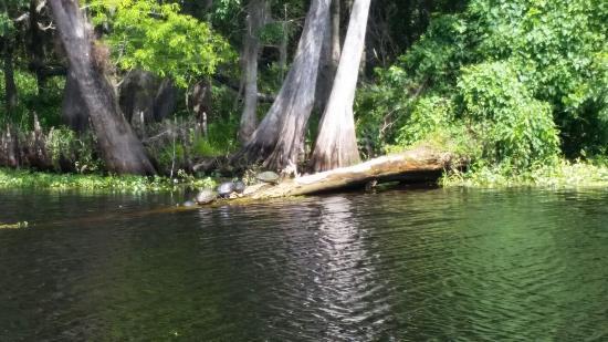 DeLand, Flórida: Blue Heron River Tours