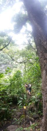 เคานากาไค, ฮาวาย: The forest.