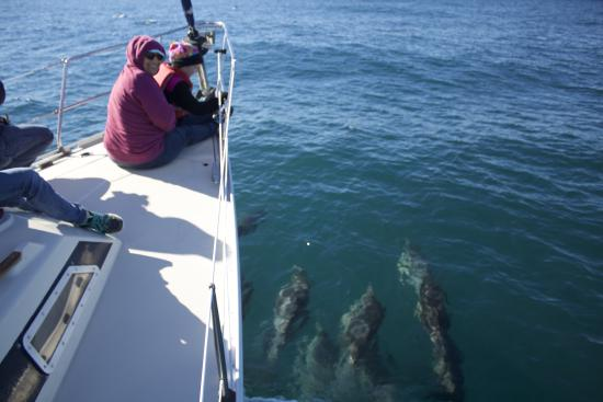 Avila Beach, CA: dolphin love to swim with sailboats