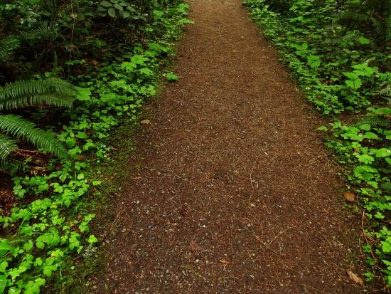 North Saanich, Canadá: Amazingly beautiful forest only a five minute drive from the airport!!!