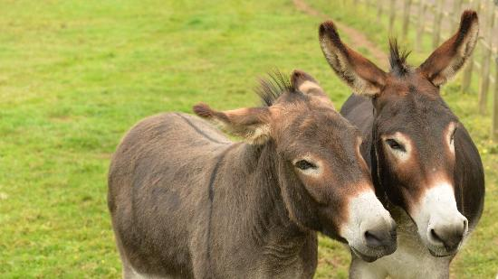 Alford, UK: Photos from two photo shoots done for the Sanctuary in 2015 and 2016