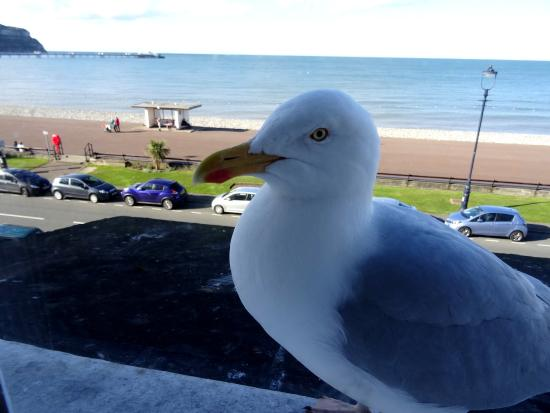 Promenad: GUlls can be noisy but this one was very docile and posed for the camera!