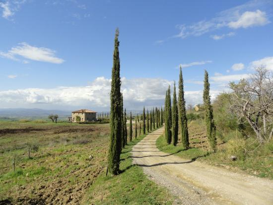 Basile Azienda Agricola Biologica: Entrance to vineyard