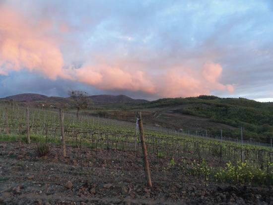 Basile Azienda Agricola Biologica: Vineyard!