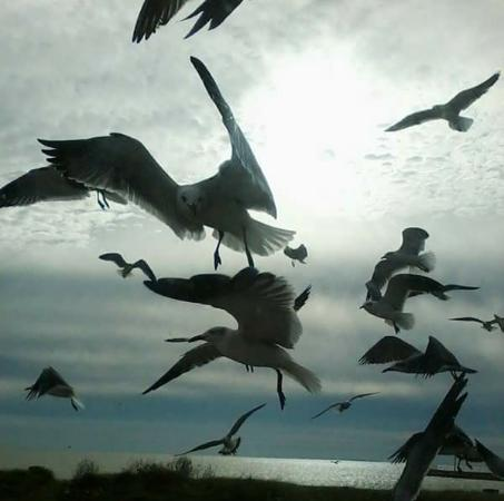 Rockport, TX: Seagulls are always ready for handouts and fun to watch!
