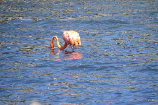 Washington-Slagbaai National Park, Μπονέρ: lotsof flamingos