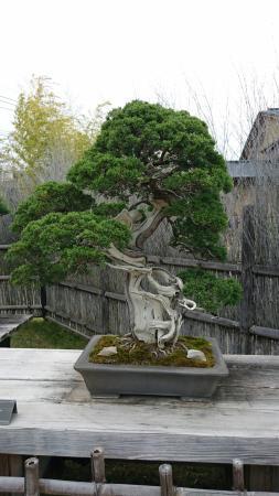 大盆栽まつり