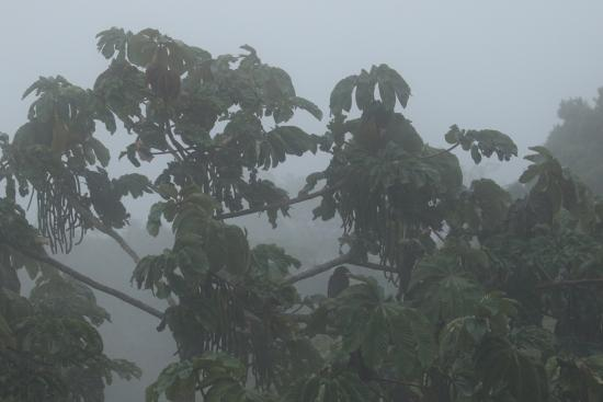 Cala Lodge: It's called a cloud forest for a reason - the view every afternoon