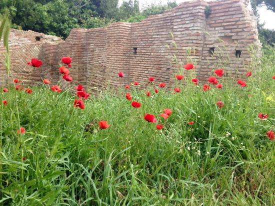 Ostia Antica, إيطاليا: photo3.jpg