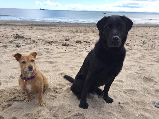 Kinghorn, UK: Beach dogs