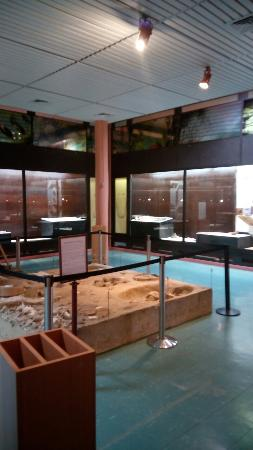 Le Moule, Γουαδελούπη: Musee de la prehistoire amerindienne Edgar-Clerc