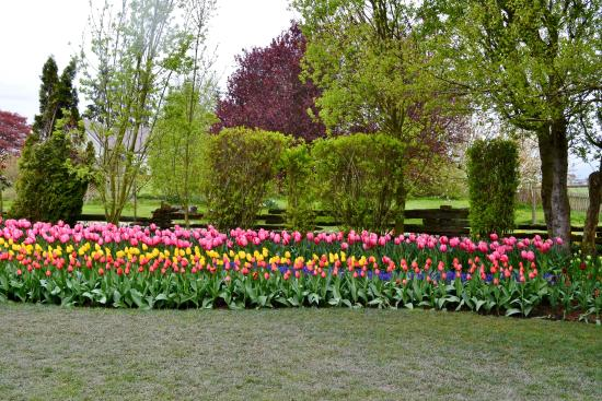 Roozengaarde\'s garden tulip displays - Picture of Skagit Valley ...