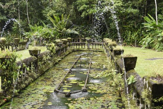 Mena Creek, أستراليا: Over Run Fish Pond 7 Fountain