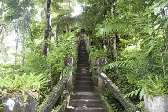 Mena Creek, أستراليا: Stairway