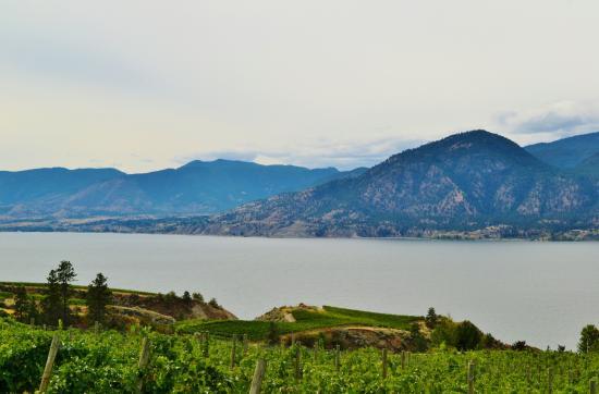 Penticton, Canadá: Vineyards in the Okanagan sun & Okanagan lake
