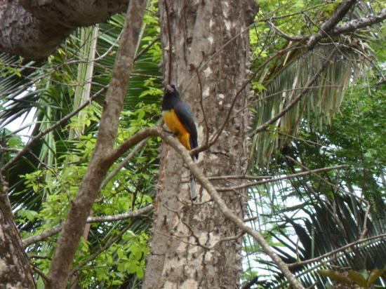 Carrillo Adventures: un oiseau parmi beaucoup que l on a pu apercevoir