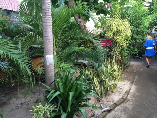 Rumah Kundun: jolie jardin
