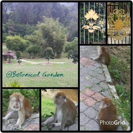 Penang Botanical Gardens: My Visit To Botanical Garden