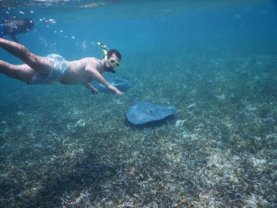 Caye Caulker, Belize: Rays at shark ray alley