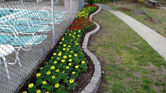 Millersville, Мэриленд: Looks like Spring!