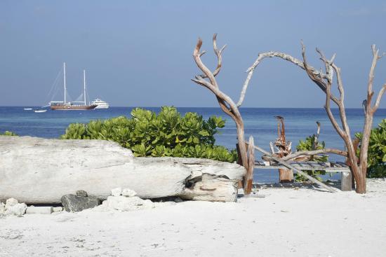 narnia maldives picture of narnia maldives maafushi island rh en tripadvisor com hk