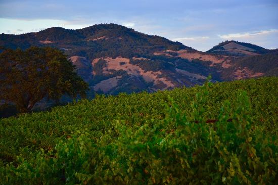 Kenwood, CA: MacLeod Family Vineyard