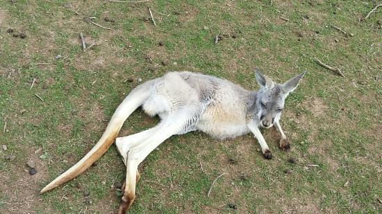 Cowes, Australia: 20160505_121156_large.jpg
