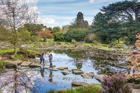 cambridge university botanic garden cu botanic garden bog garden - Bog Garden