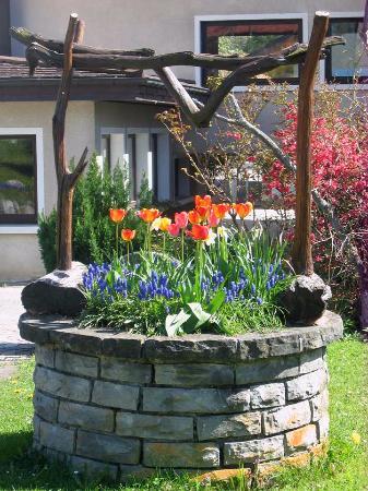 Толлон-ле-Мемиз, Франция: fleurs du jardin