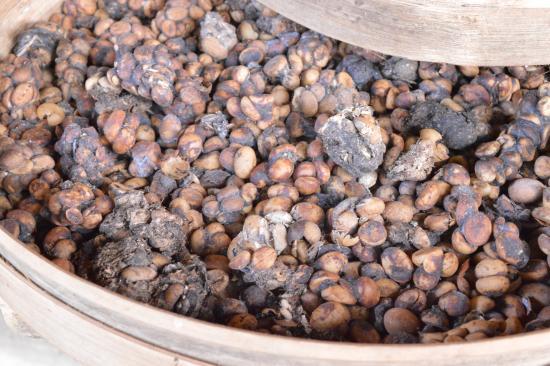 Tegalalang, Indonesia: Schleichkatzen-Kaffee vor Reinigung und Röstung