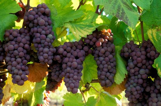 Paso Robles Inn: Wine Region of the Year