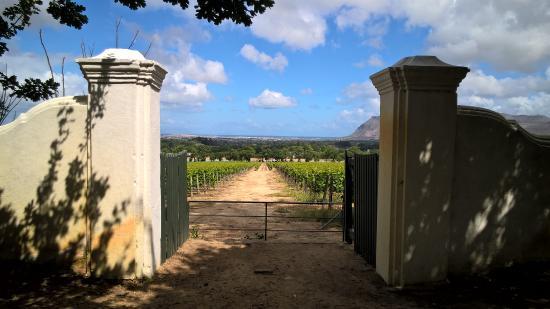 Виноградники Groot Constantia
