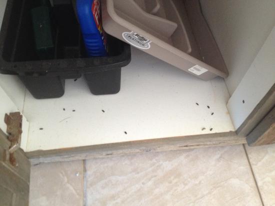 Witsand, Republika Południowej Afryki: Mouse droppings