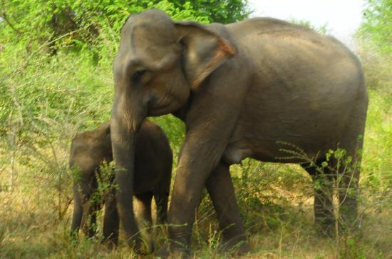 Drive More Sri Lanka: Habarana National Park