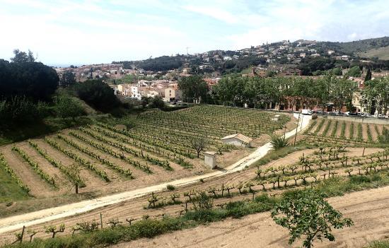 The Wine Colours: photo6.jpg