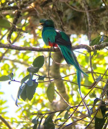 Sendero Los Quetzales (The Quetzales Trail) Aufnahme