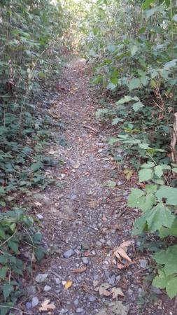 Burnaby, Canadá: Mountain path