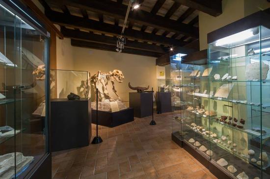 Museo di Storia Naturale Gagliole